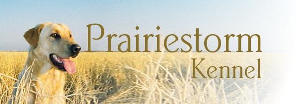 Prairiestorm Kennel Logo